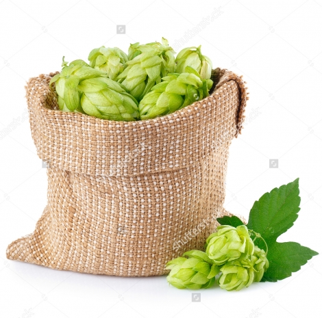 stock-photo-fresh-green-hops-in-burlap-bag-with-branch-near-isolated-on-white-background-hop-cones-isolated-on-481516504-2